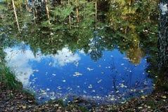Lagoa da floresta Fotografia de Stock