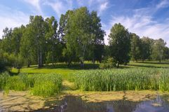 Lagoa da floresta Foto de Stock