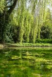 Lagoa da mola Fotografia de Stock