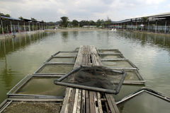 Lagoa da pesca da cultura aquática de Ásia Imagem de Stock