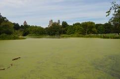Lagoa da tartaruga Imagem de Stock Royalty Free