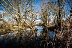 Lagoa da vila Fotografia de Stock Royalty Free