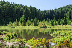 Lagoa das Empadadas in Forest, Sao Miguel, Azores, Portugal Royalty Free Stock Images
