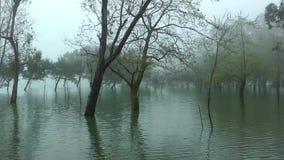 Lagoa DAS Furnas vídeos de arquivo