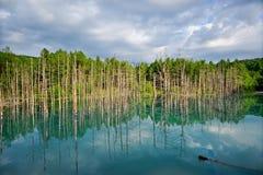 Lagoa de água fresca Imagem de Stock Royalty Free
