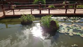 Lagoa de água mostrando video da natureza com peixes video estoque