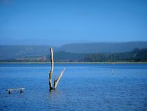 Lagoa de Knysna Foto de Stock