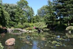 Lagoa de Koi imagem de stock royalty free