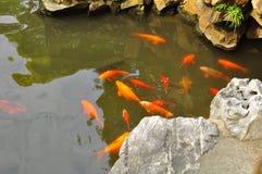 A lagoa de Koi Fish no templo velho do ` s do deus da cidade e Yuyuan jardinam, Shanghai Imagens de Stock Royalty Free