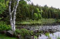 Lagoa de Nova Inglaterra Fotografia de Stock