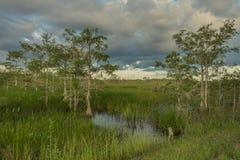 Lagoa de Paurotis dentro do parque nacional dos marismas fotos de stock
