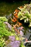 Lagoa de peixes Imagens de Stock Royalty Free
