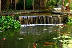 Lagoa de peixes Fotografia de Stock