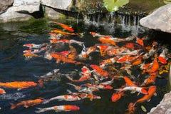 Lagoa de peixes de Koi fotografia de stock royalty free