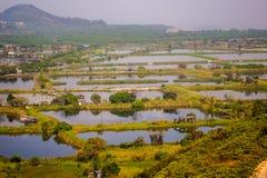 Lagoa de peixes em territórios novos Fotografia de Stock Royalty Free