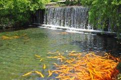 Lagoa de peixes no parque imagem de stock
