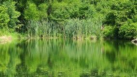 Lagoa de pesca com fundo verde da paisagem Fotos de Stock Royalty Free