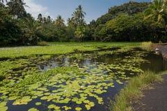 A lagoa de Punaluu Foto de Stock Royalty Free