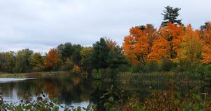 Lagoa de Salisbúria outono atrasado em Worcester, Massachusetts imagem de stock royalty free