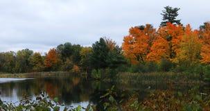 Lagoa de Salisbúria outono atrasado 4K em Worcester, Massachusetts vídeos de arquivo
