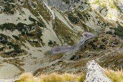Lagoa de Staszica - um lago cargo-glacial periódico na parte inferior do vale atrás da monge no Tatras alto no Polônia fotos de stock