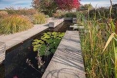 Lagoa decorativa com lírios e bastões de água no jardim Fotografia de Stock Royalty Free