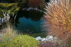 Lagoa decorativa pequena em que carpa de flutuação fotografia de stock royalty free