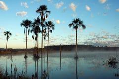 Lagoa del na de Buriti Foto de archivo libre de regalías