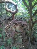 Lagoa do apoyo 3 Imagens de Stock
