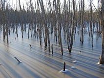 Lagoa do castor Fotos de Stock Royalty Free