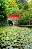 Lagoa do jardim Imagens de Stock