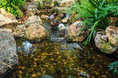 Lagoa do jardim Fotos de Stock