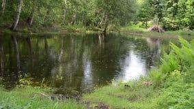 Lagoa do jardim da chuva video estoque