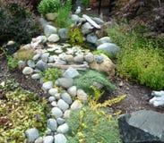 Lagoa do jardim da frente com ervas naturais Fotos de Stock Royalty Free