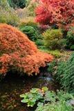 Lagoa do jardim do outono Imagem de Stock Royalty Free