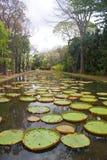 Lagoa do lírio Imagens de Stock Royalty Free