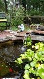 Lagoa do lírio Imagem de Stock Royalty Free