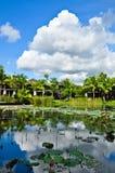 Lagoa do lírio de água (lótus) Fotografia de Stock Royalty Free