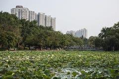 Lagoa do lírio de água, Shenzhen Fotografia de Stock