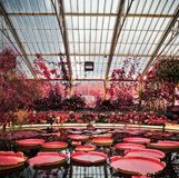 Lagoa do lírio do jardim de Kew no infravermelho Imagens de Stock Royalty Free