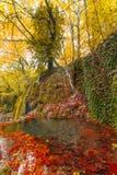 Lagoa do outono Fotografia de Stock