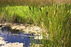 Lagoa do pântano de Florida imagem de stock