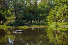 Lagoa do parque foto de stock