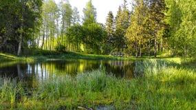 Lagoa do verão Imagens de Stock Royalty Free