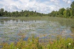 Lagoa do verão em Canadá oriental Foto de Stock