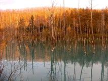 Lagoa dos pássaros Imagem de Stock Royalty Free