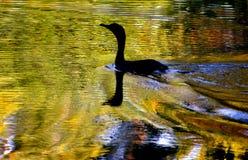 Lagoa dourada Imagem de Stock Royalty Free
