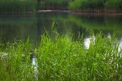 Lagoa e estações de tratamento de água no dia de verão Foto de Stock