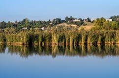 Lagoa e junco fotografia de stock