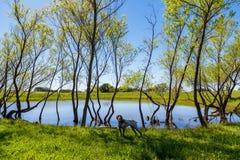Lagoa e ponteiro de Texas imagens de stock